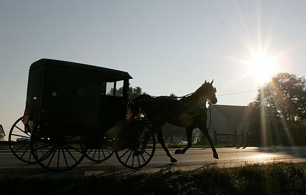 Amish horse and bugg