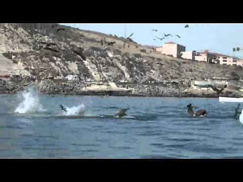 whale and kayak