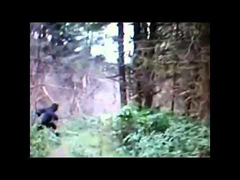 Bigfoot in Ohio?